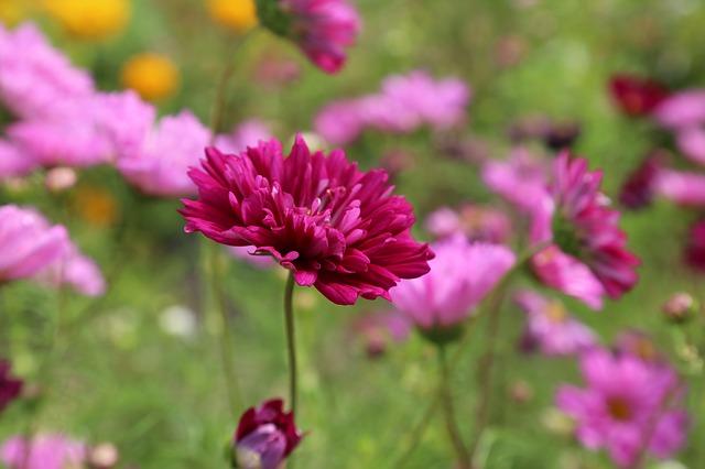flower-408833_640.jpg