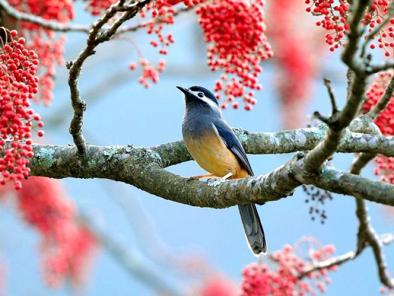 tree and bird.jpg
